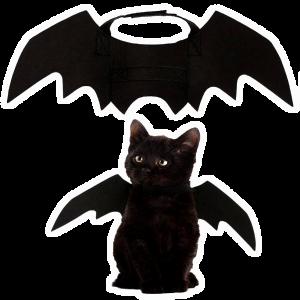 bact cat wings
